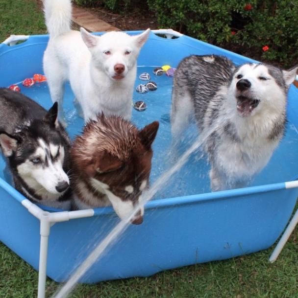Eles adoram uma piscina, não importa o tamanho! (Foto: Reprodução / Instagram)
