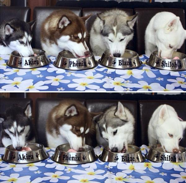 Akira, Phènix, Blaze e Shiloh comendo sorvete caseiro. (Foto: Reprodução / Instagram)