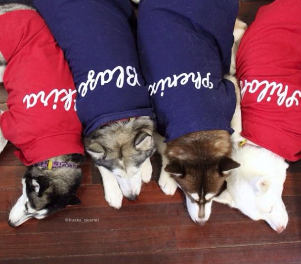 Eles ganharam roupas personalizadas. (Foto: Reprodução / Instagram)