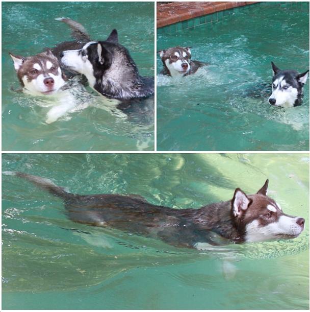 Nadando. (Foto: Reprodução / Instagram)
