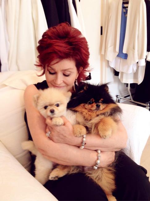 Sharon com Bella e Rocky. (Foto: Reprodução / Instagram)