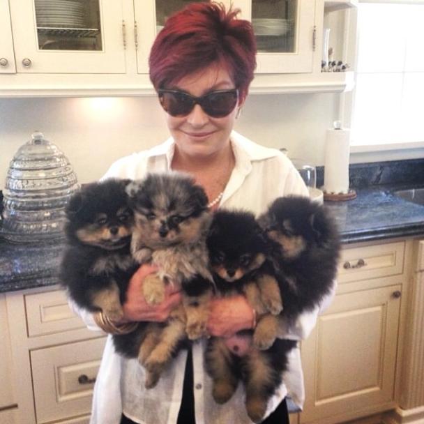Sharon Osbourne adotou 4 cachorrinhos. (Foto: Reprodução / Instagram)