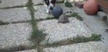 tartaruga-cachorro-video-bola-futebol