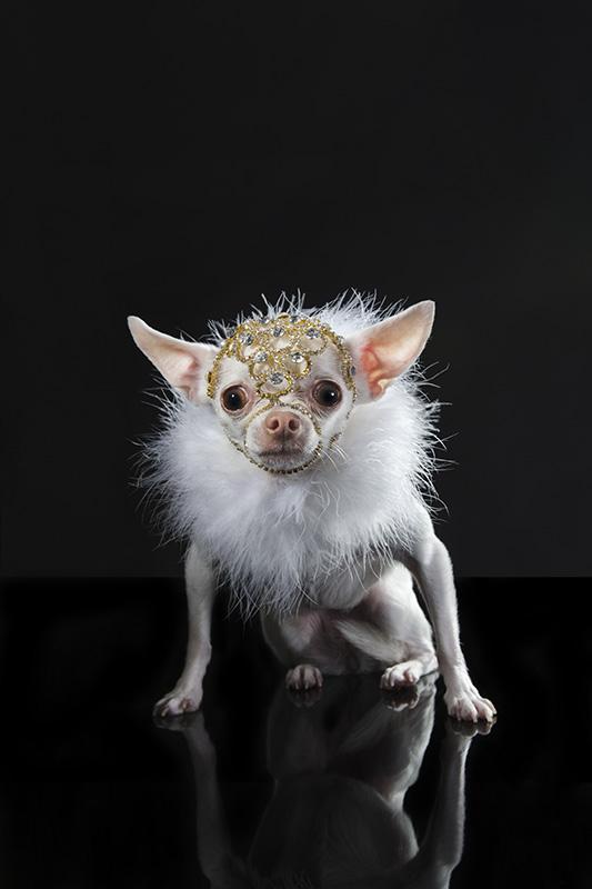 Série Watchdog mostra pequenos cães de guarda. (Foto: Reprodução / Site Sophie Gamand)