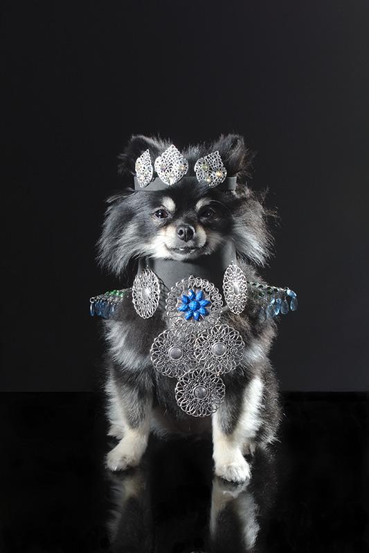 Os cachorros pequenos costumam viver no luxo. (Foto: Reprodução / Site Sophie Gamand)