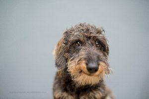 Por que devemos adestrar nossos cães?Foto: Reprodução.