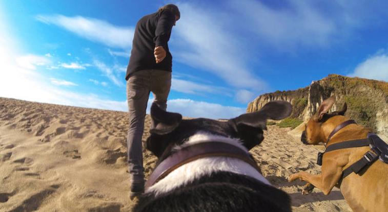 O ponto de vista canino pode ser gravado.  (Foto: Divulgação / GoPro)