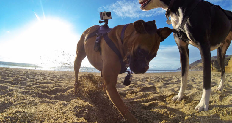 O cachorro pode ir à praia com o equipamento, porque é resistente à água.  (Foto: Divulgação / GoPro)