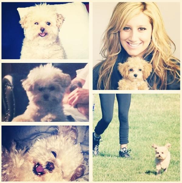 Maui é a melhor amiga de Ashley Tisdale. (Foto: Reprodução / Instagram)