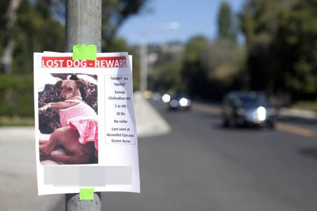 Cartaz oferece mil dólares como recompensa. (Foto: Reprodução / Metro UK)