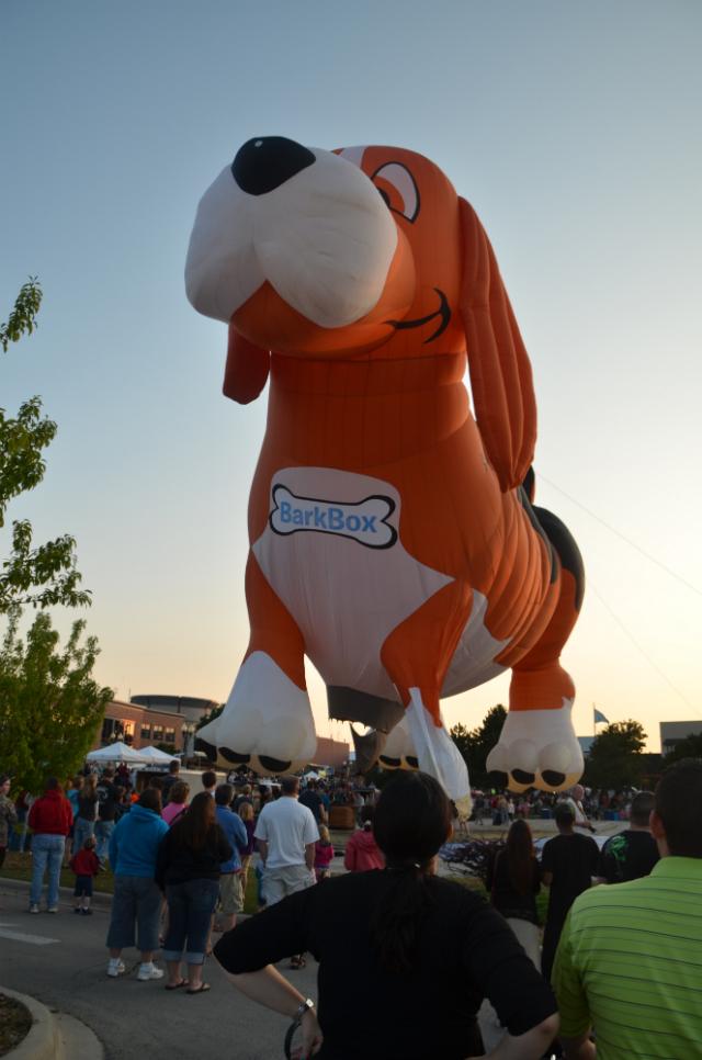 Um lindo e enorme Beagle. (Foto: Reprodução / Bark Post)