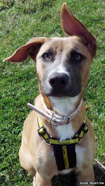 A cachorra Valerie precisa de um novo lar. (Foto: Reprodução / BBC UK)