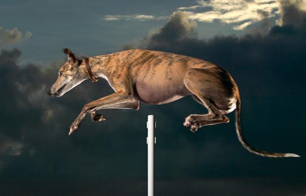 Cinderella tem o recorde mundial de maior salto em altura de um cachorro. (Foto: Reprodução / Guinness World Records)