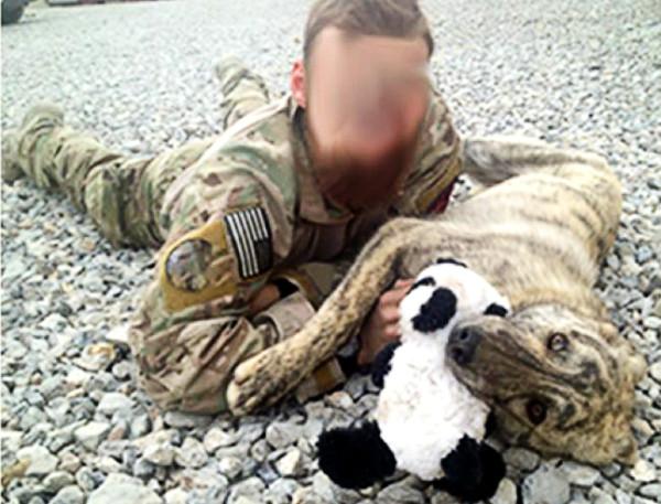 O cachorro Rommel com o sargento que salvou sua vida. (Foto: Reprodução / Bark Post)