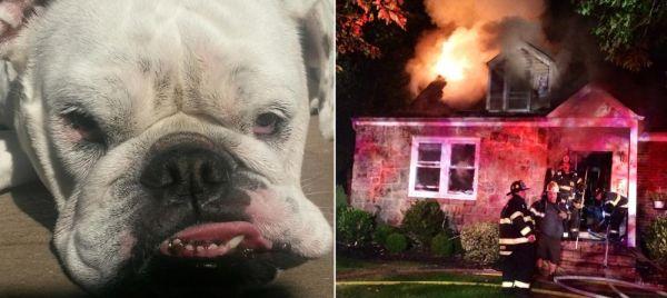 A cachorra Roxanne salvou sua família durante um incêndio. (Foto: Reprodução / Newsday)