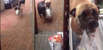 cachorro-carrega-compras-casa