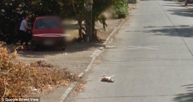 Em seguida, o cachorro muda de posição, indicando que ele apenas se machucou. (Foto: Reprodução / Daily Mail uk)