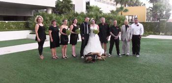 cachorro-casamento-aliancas
