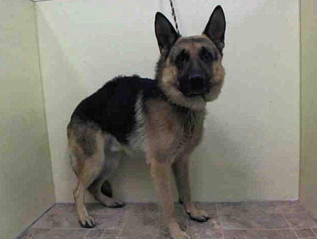 Apesar de sua lealdade, o cachorro Duke foi abandonado. (Foto: Reprodução / Daily Mail)