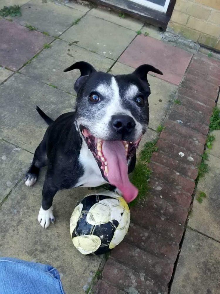 O cão Harvey foi eleito o cão mais sorridente. (Foto: Reprodução / Mirror)