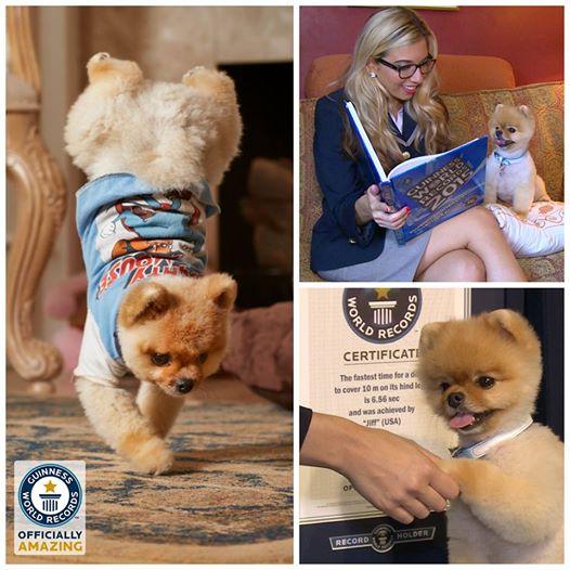O cachorro Jiff entrou para o livro dos recordes. (Foto: Divulgação / Facebook / Guinness World Records)