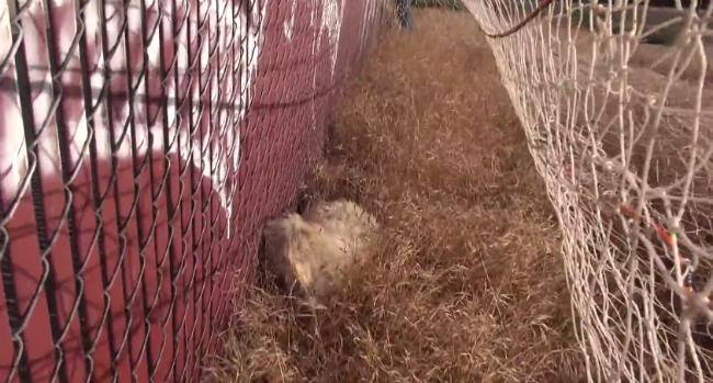 O resgate foi difícil porque o cachorro estava com medo. (Foto: Reprodução / Bark Post)