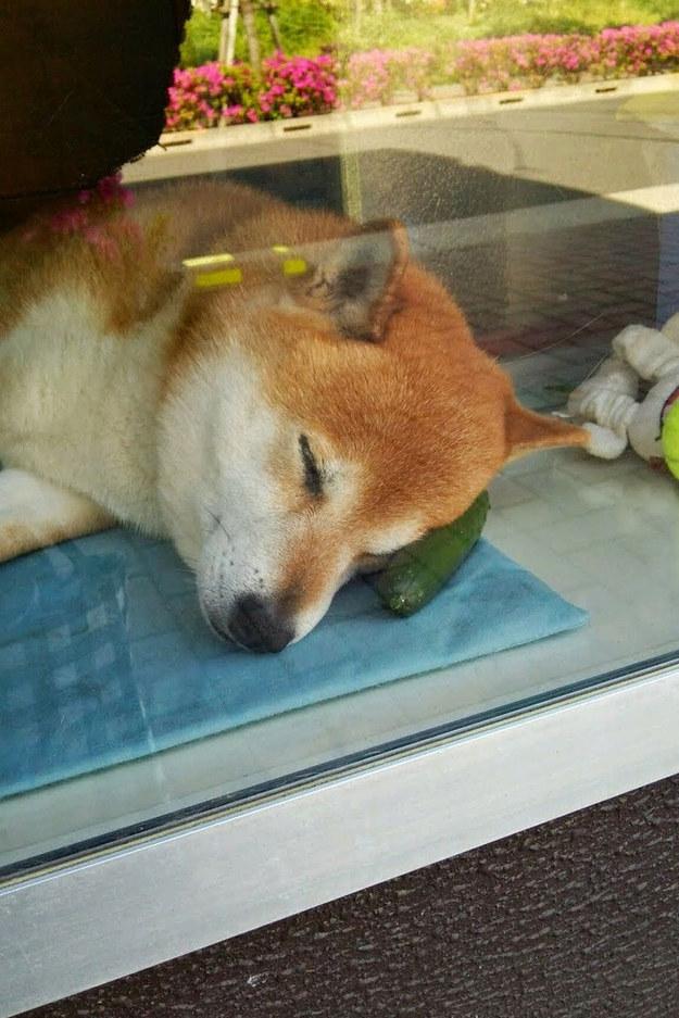 Alguém ainda vai comer esse pepino? Foto: Reprodução