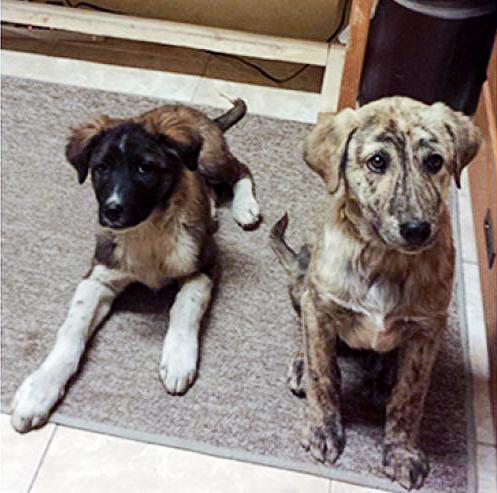 Os cães Rommel e Blitz foram resgatados quando ainda era filhotes. (Foto: Reprodução / Bark Post)