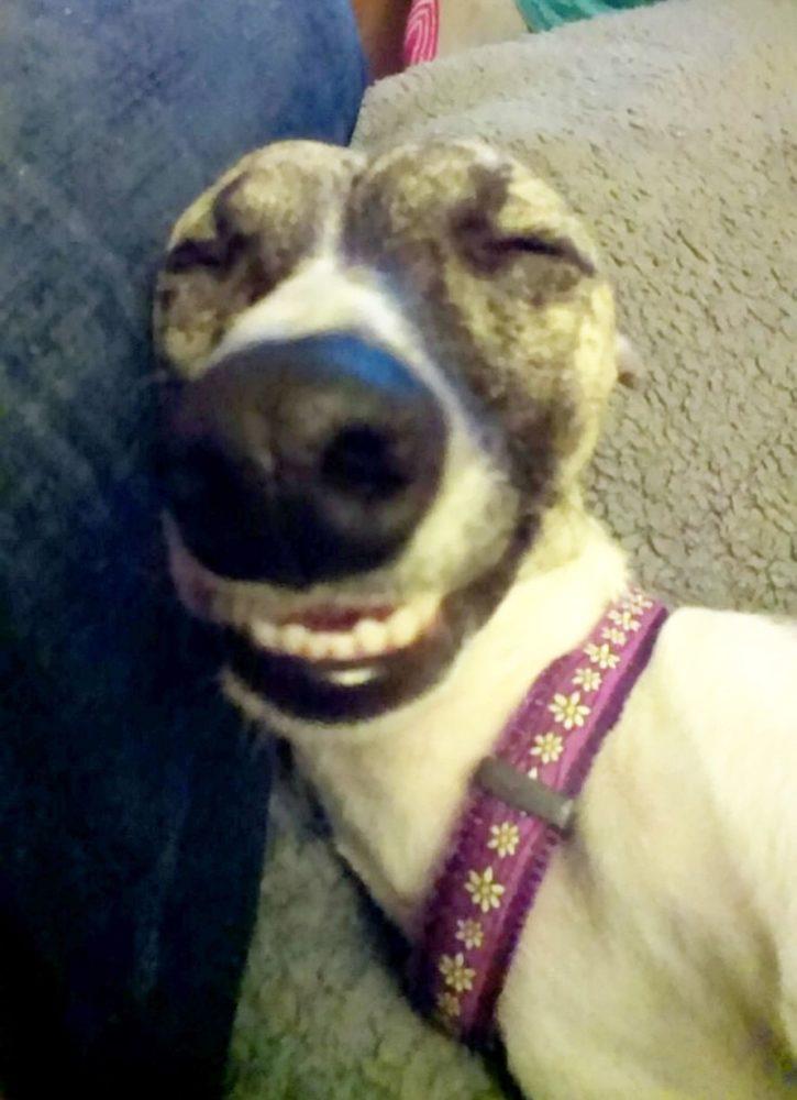 Daisy, da raça Whippet. (Foto: Reprodução / Mirror)