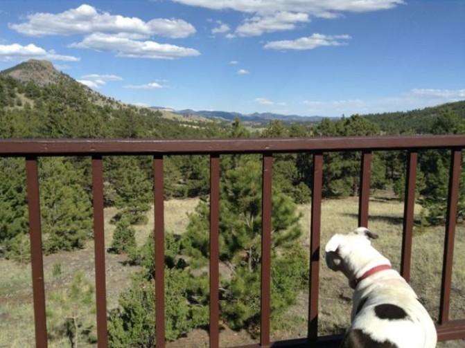A cachorra gosta das montanhas. (Foto: Reprodução / Bark Post)