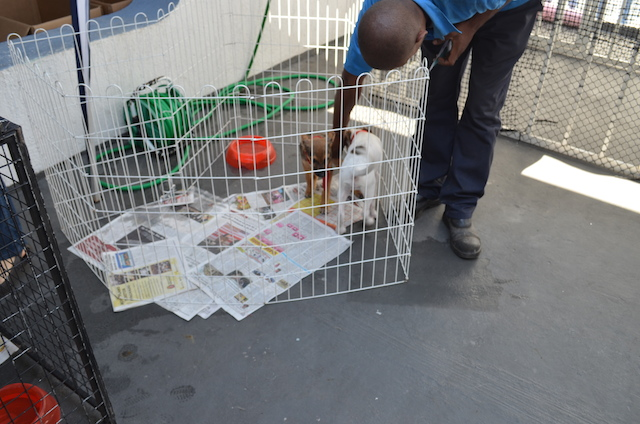 Cachorros recebendo carinho. (Foto: Fabricio Ladeira)