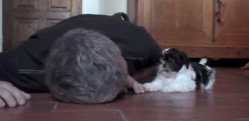 filhote-brincalhao-video-cachorro