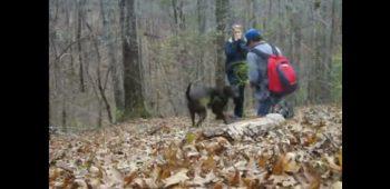 floresta-cachorro-pedido-casamento-arruinado-video
