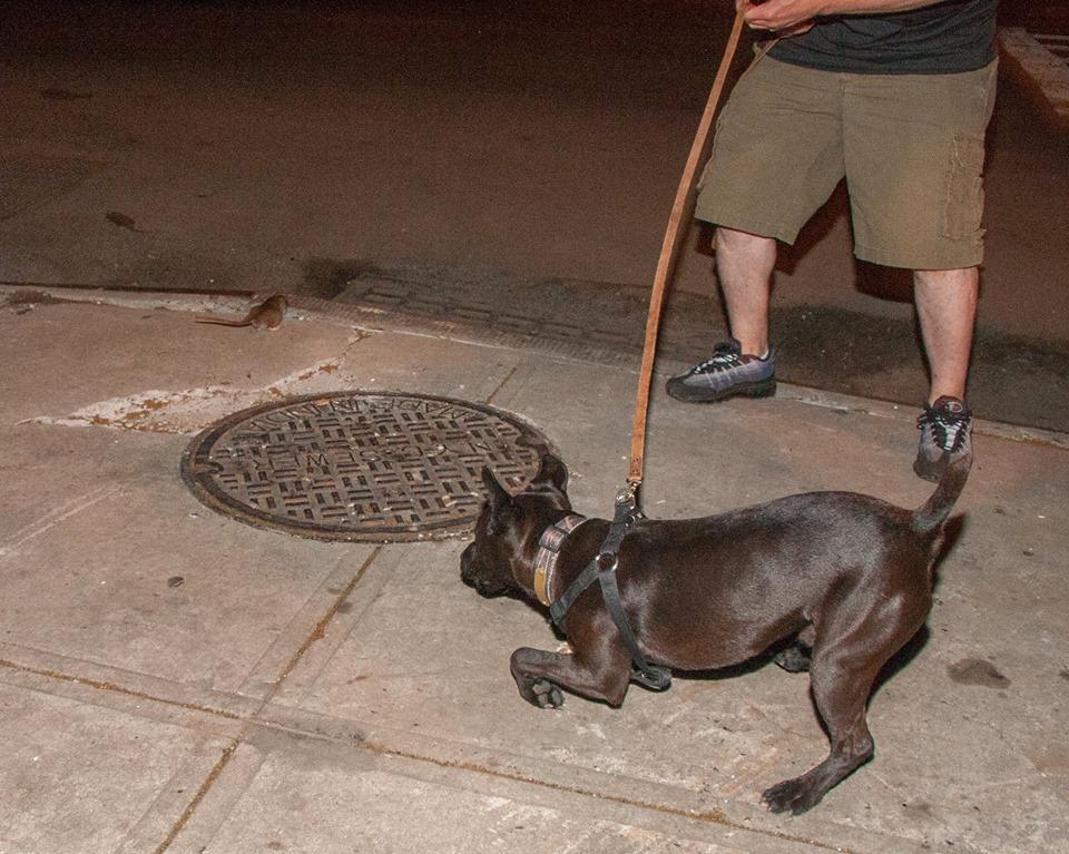 Cachorro caçando rato. (Foto: Reprodução / Facebook / R.A.T.S)