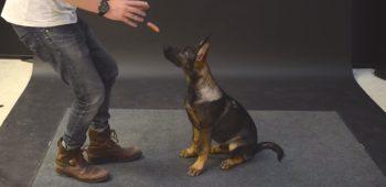 jose-ahonen-cachorro-salsicha-truque-magica