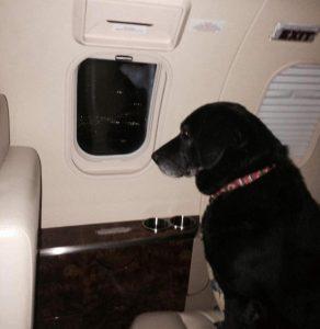 Lady voando para sua nova casa. Foto: Reprodução