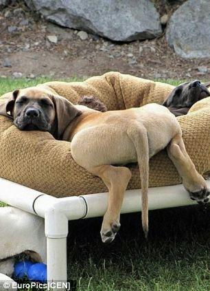 Postar fotos dos bumbuns dos cães virou mania no Japão. (Foto: Reprodução / Daily Mail)
