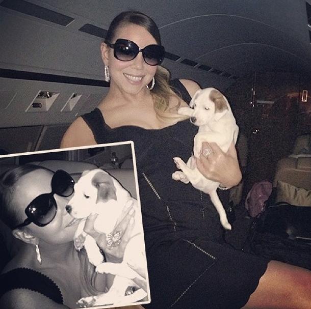 Mariah Carey viajando com o cachorro The Good Reverend Pow Jackson. (Foto: Reprodução / Daily Mail)
