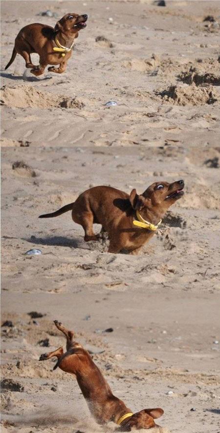 momento-queda-gif-cachorro