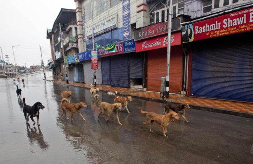 New Deli vai recrutar cães de rua para cuidar da segurança. (Foto: Reprodução / Bark Post / Associated Press)
