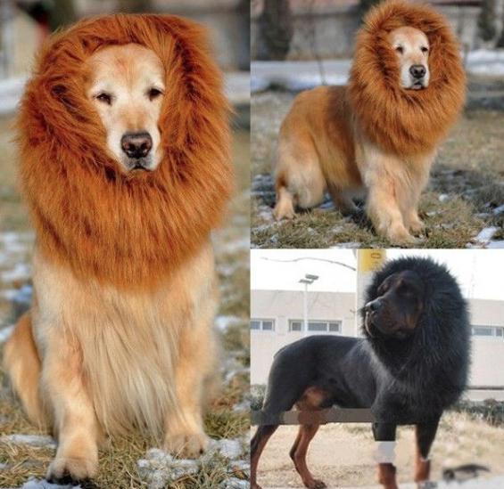 Peruca de leão para cachorro. (Foto: Reprodução / Ali Express)