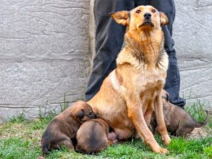 Mamãe e seus filhotes. Foto: Divulgação