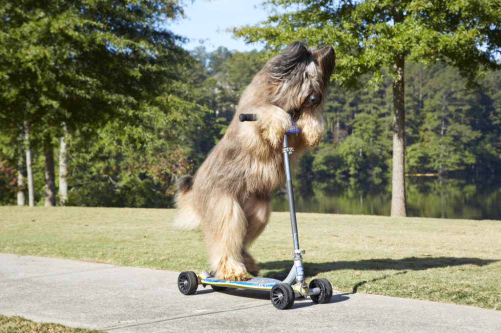 Norman, o Scooter Dog. (Foto: Reprodução / The I Love Dogs Site / Kevin Scott Ramos/ Guinness World Records)