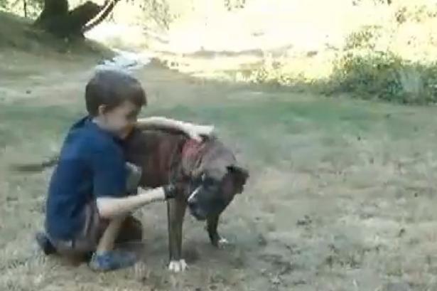 Cachorra fiel que se tornou uma heroína. (Foto: Reprodução / Mirror uk)