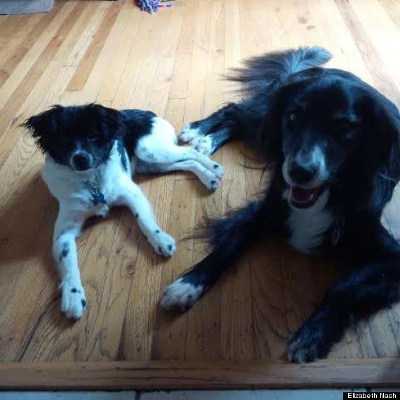 Annie (direita) e Maisie (esquerda). (Foto: Reprodução / Huffington Post)