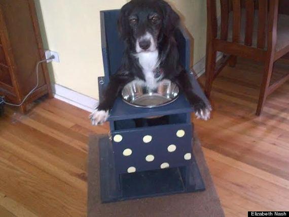 A cachorra Annie precisa comer nessa posição para que a comida chegue até seu estômago. (Foto: Reprodução / Huffington Post)