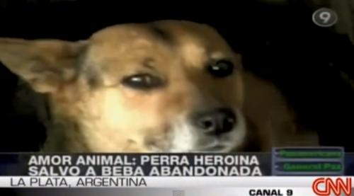 Cachorra salvou bebê abandonado. (Foto: Reprodução / Bark Post)