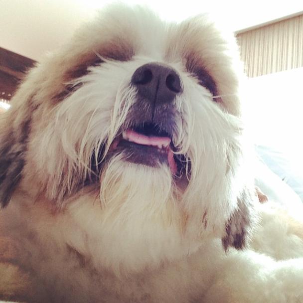 Cachorro de Ivete Sangalo. (Foto: Reprodução / Instagram)