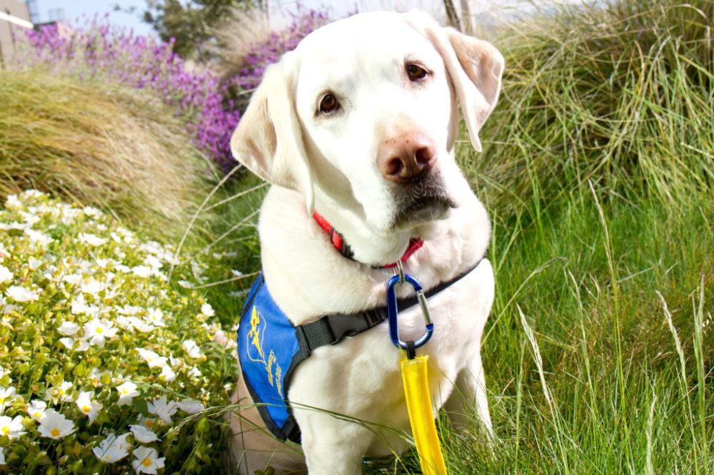 (Foto: Reprodução / The I Love Dogs Site / Guinness World Records)