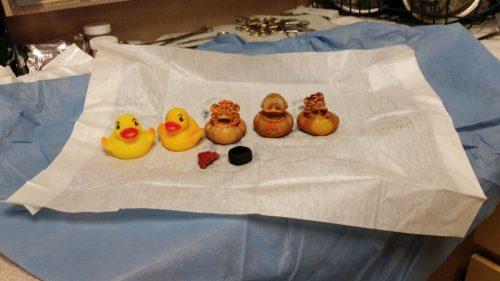 Todos brinquedos foram retirados da barriga do cachorro. (Foto: Reprodução / Veterinary Pratice News)